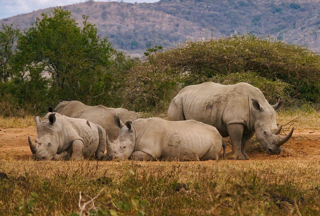Rhino Hluhluwe Imfolozi leopard travel