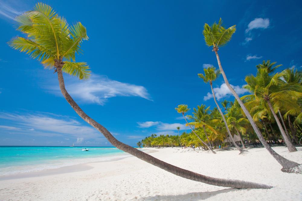 Zanzibar palm tree, leopard travel